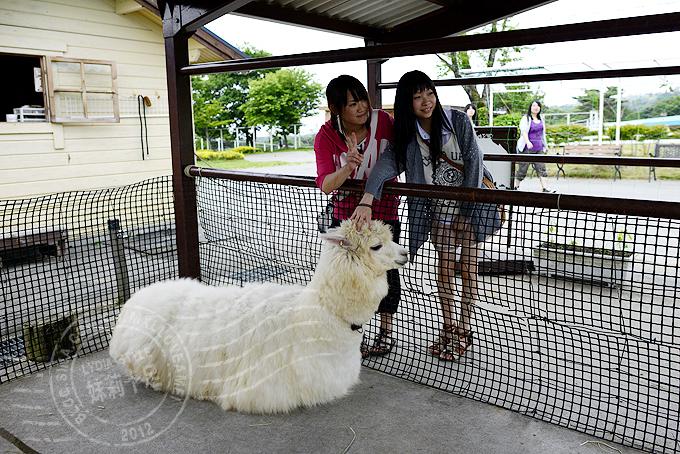 人与动物和谐相处的日本动物园(21/29)