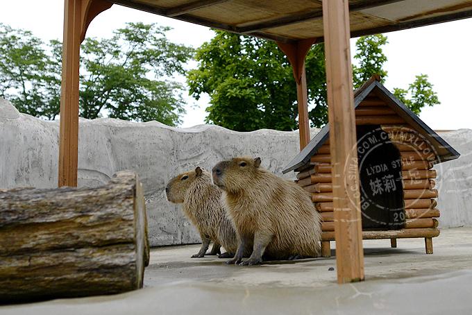 人与动物和谐相处的日本动物园