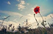 风光摄影:野花