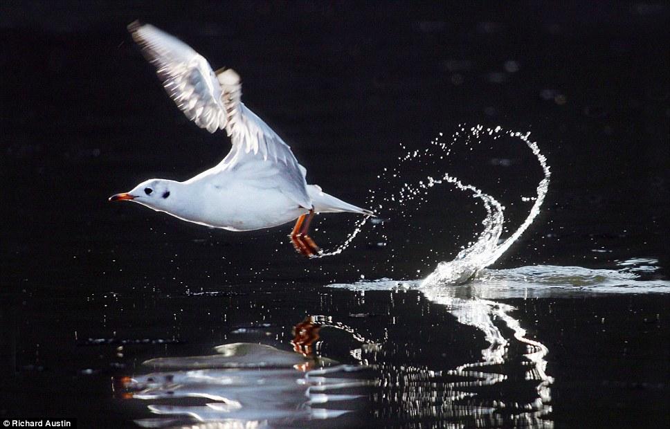 动物 理查德/英国摄影师镜头下的奇趣动物(3/16)...