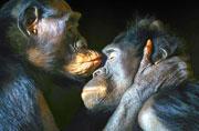 比人类更人类:动物人性化肖像