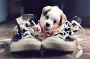 动物摄影:超萌小狗
