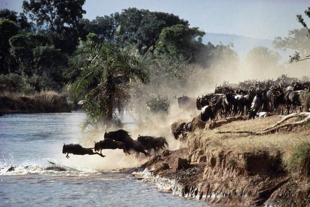 十大原始动物图片