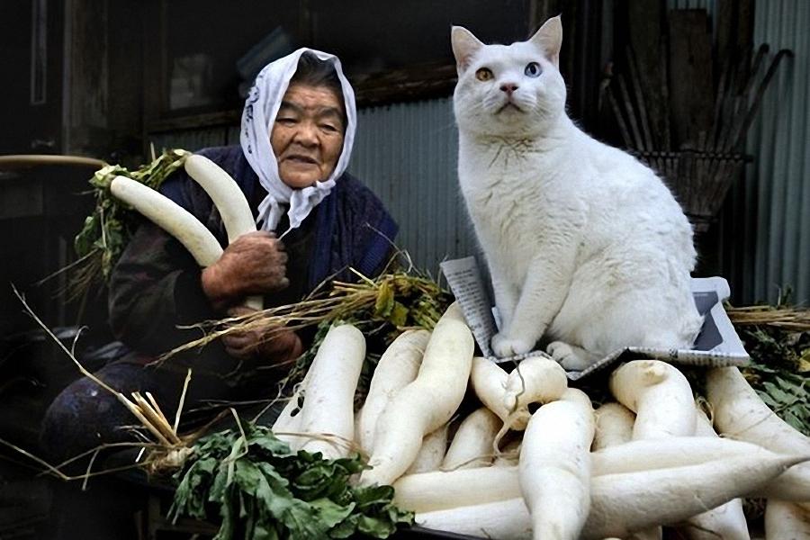 深圳 外婆/纪实摄影:外婆和她的猫(10/29)...