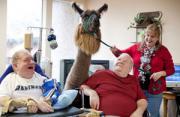 纪实摄影:羊驼治疗师