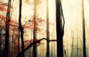 风光摄影:丛林雾升
