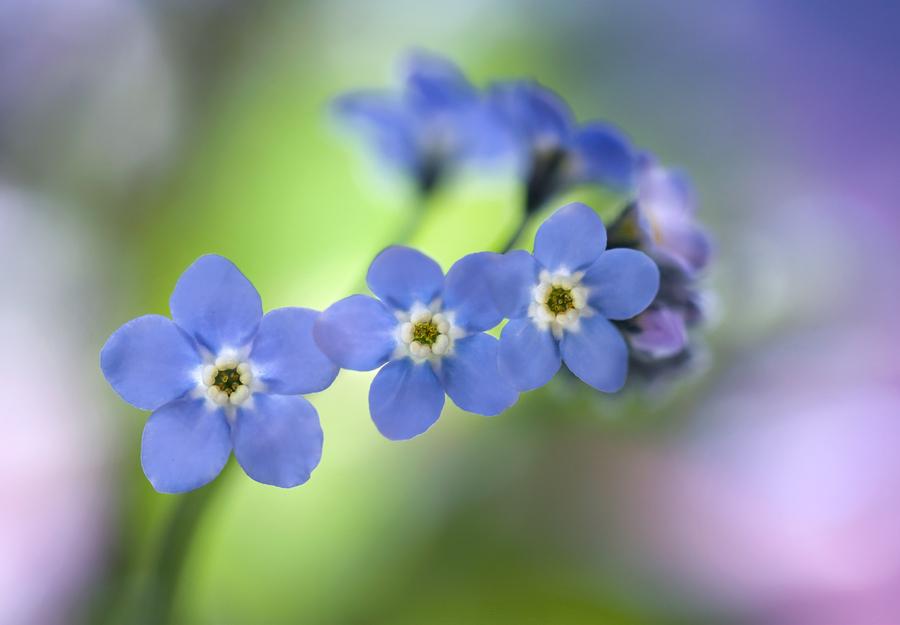 光摄影 花恋 花朵