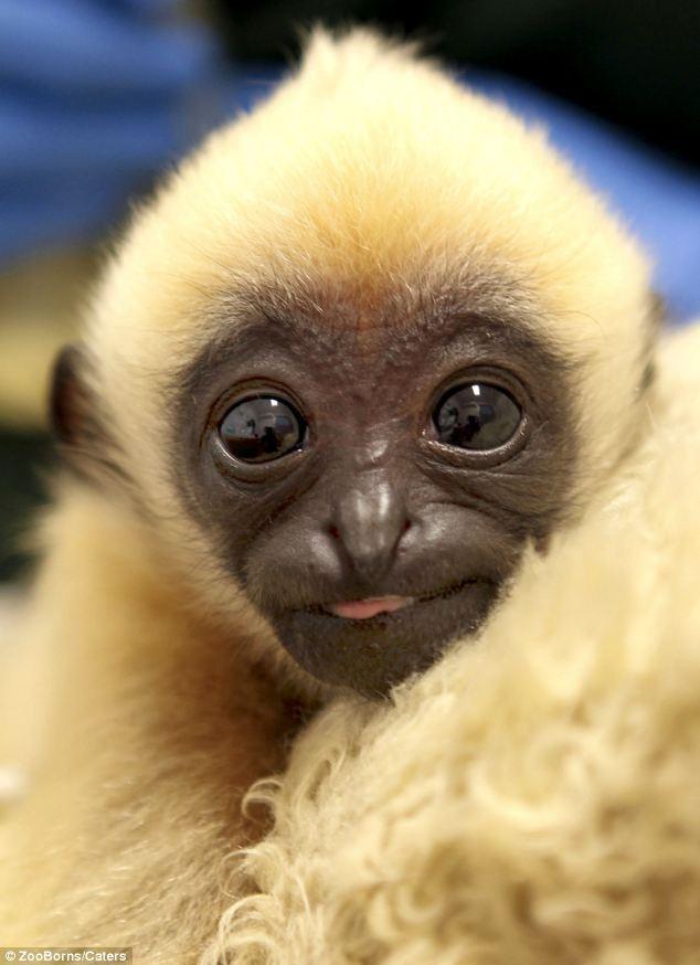 国内资讯_世界濒危动物宝宝照片秀_科技_环球网