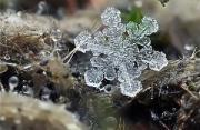 自然摄影:雪花白轻美