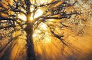 风光摄影:森林之光