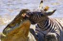 【2012·全球记忆】动物猎食