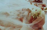 Amber Ortolano:两生花