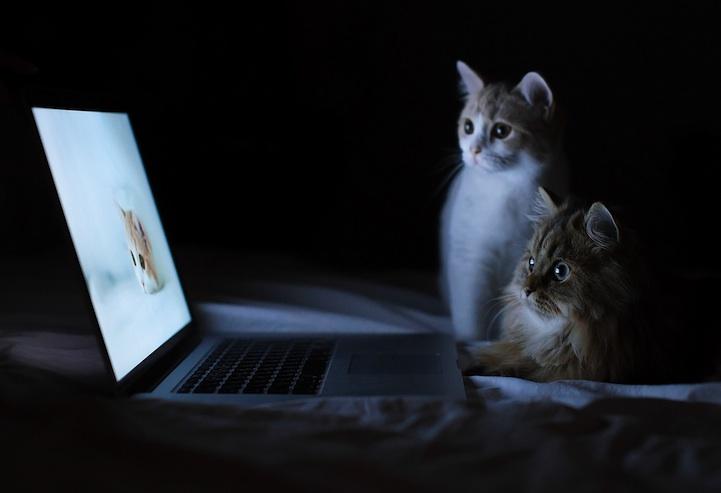 动物摄影:世界上最萌的小猫_摄影_环球网