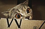 动物摄影:带美瞳的喵星人