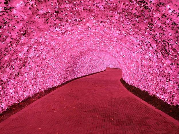 [组图] 梦幻的花灯展览 浪漫的樱花隧道(29P) - 路人@行者 - 路人@行者