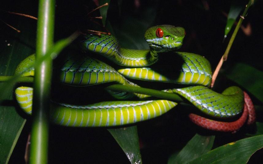 皇蛇兽_动物 蛇 858_536