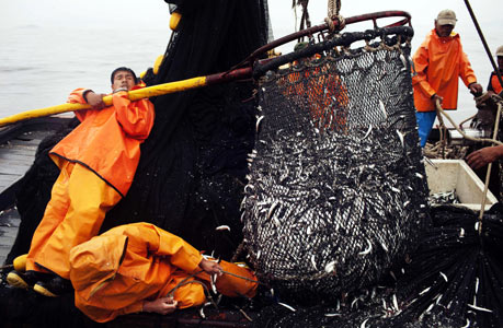 秘鲁渔民的生计之忧