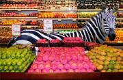 观念摄影:动物大超市