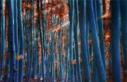 风光摄影:幻彩森林