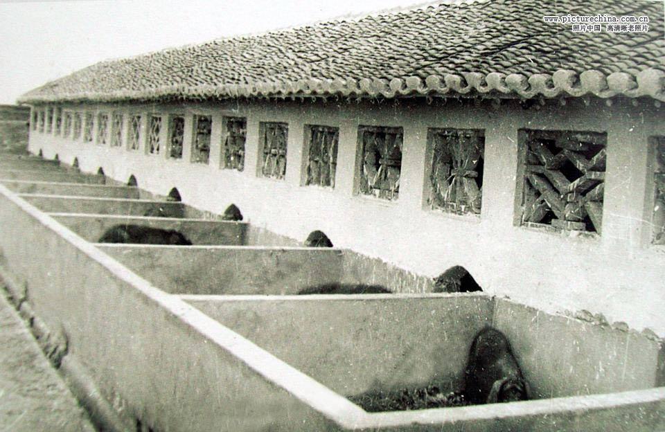 八十年代中国农村影像