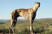 动物摄影:南非高原的自由隐匿
