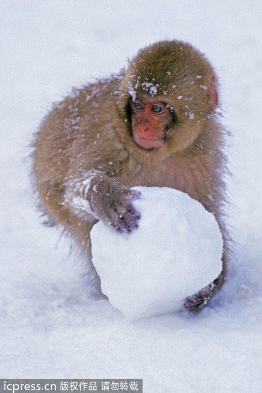 疯狂动物城雪球壁纸