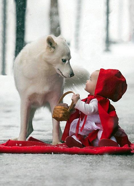 写真 小红帽/经典:大灰狼和小红帽...