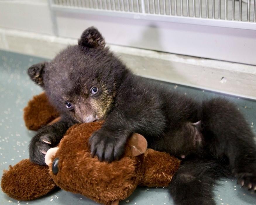 盘点2012最萌动物婴儿照_图片_环球网