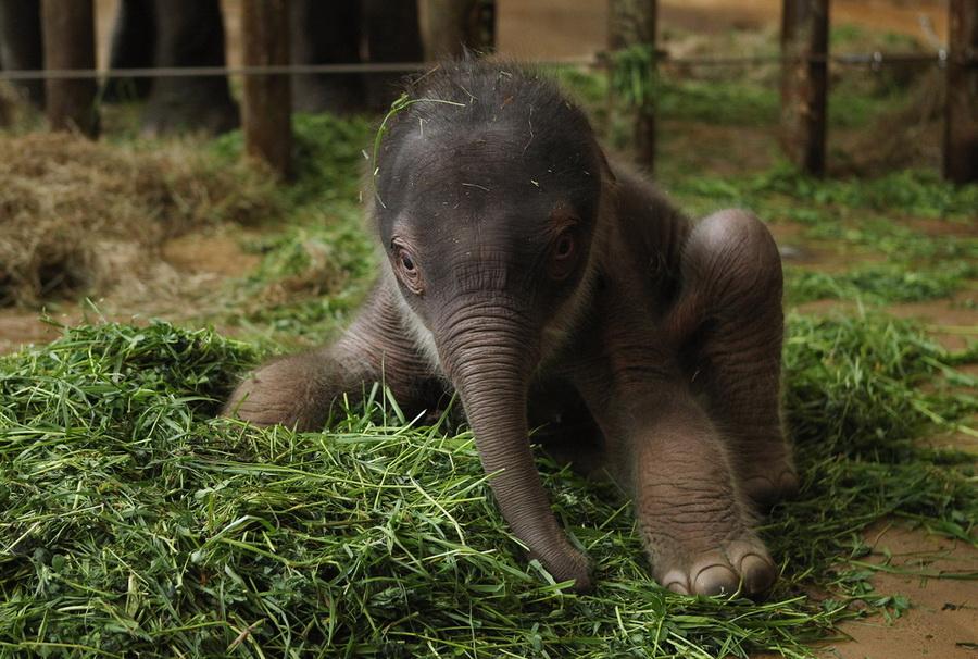 盘点2012最萌动物婴儿照