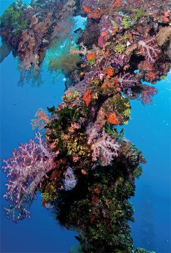 五彩斑斓的珊瑚
