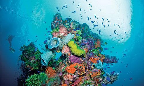 壮观的珊瑚礁