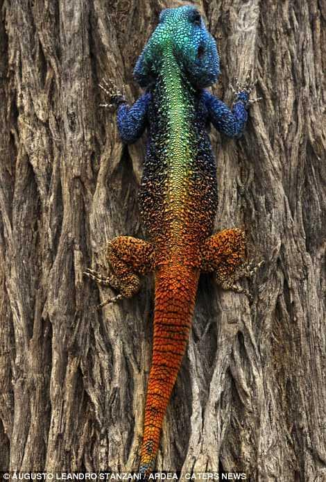 抓拍全球大自然中颜色最鲜艳动物