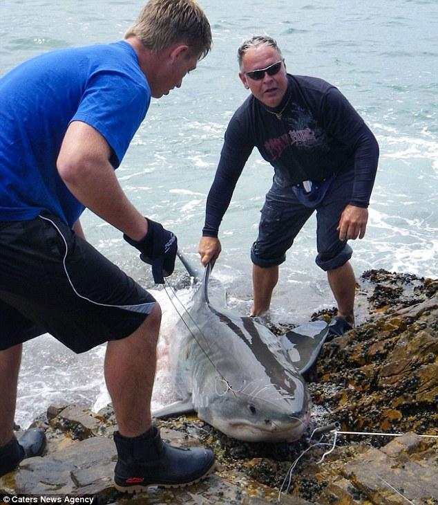 cf白鲨出车祸 cf白鲨个人仓库图片 高清图片
