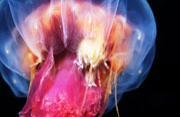 超乎想象的海底世界生物