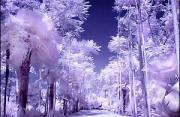 自然风光:红外线摄影集结号