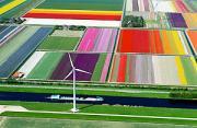 风光摄影:郁金香的五彩大地