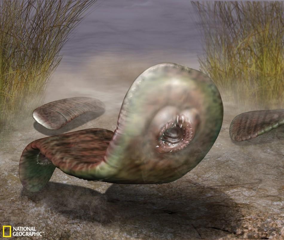 动物界诞生初期奇异生物:过滤水中颗粒为生