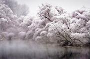 自然风光:雾冰藜