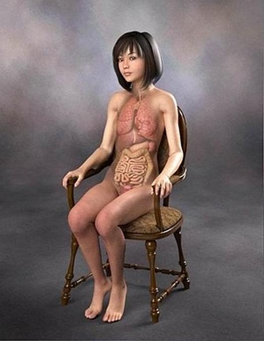 医学人体解剖图 - 后悔有药 - 后悔有药的博客