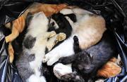 纪实摄影:垃圾袋里的流浪猫