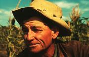 纪实摄影:大萧条时期的美国种植园