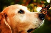 动物肖像:路遇狗狗的幸福生活