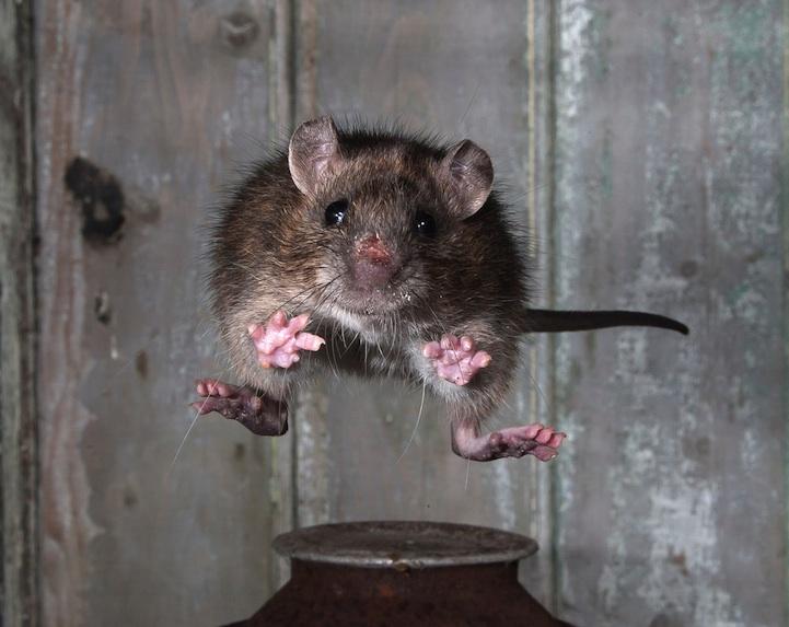 2013哺乳动物协会摄影师奖