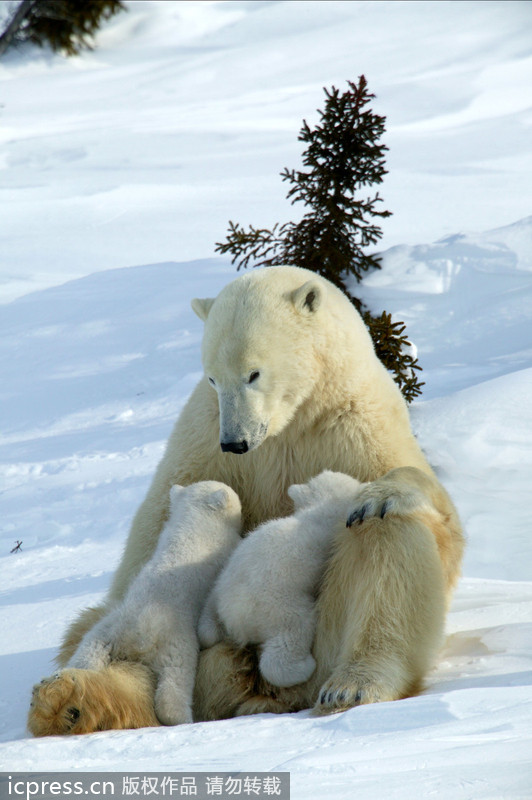 国内资讯_动物母爱浓情令人动容_旅游_环球网