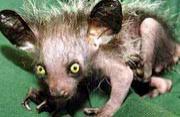 世界上最丑陋的20种动物