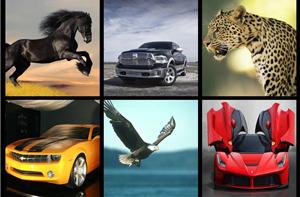 解密汽车与动物世界的不解之缘