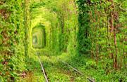 震撼眼球的十大最美林荫大道