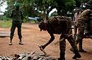 非洲大象被疯狂偷猎