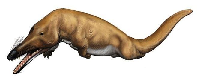 展览揭示神奇鲸鱼世界 从陆地走向海洋的巨兽