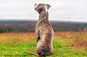 垃圾场的狗:关注动物过剩问题